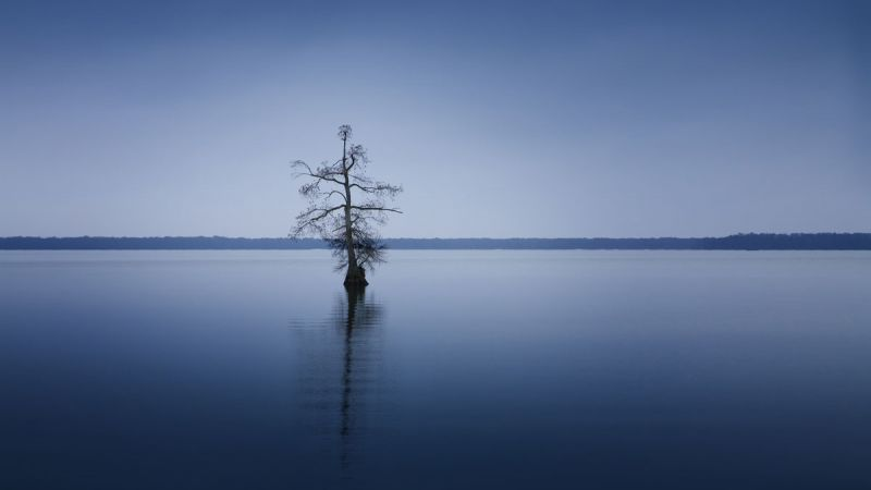 Reelfoot Lake State Park — Tennessee State Parks