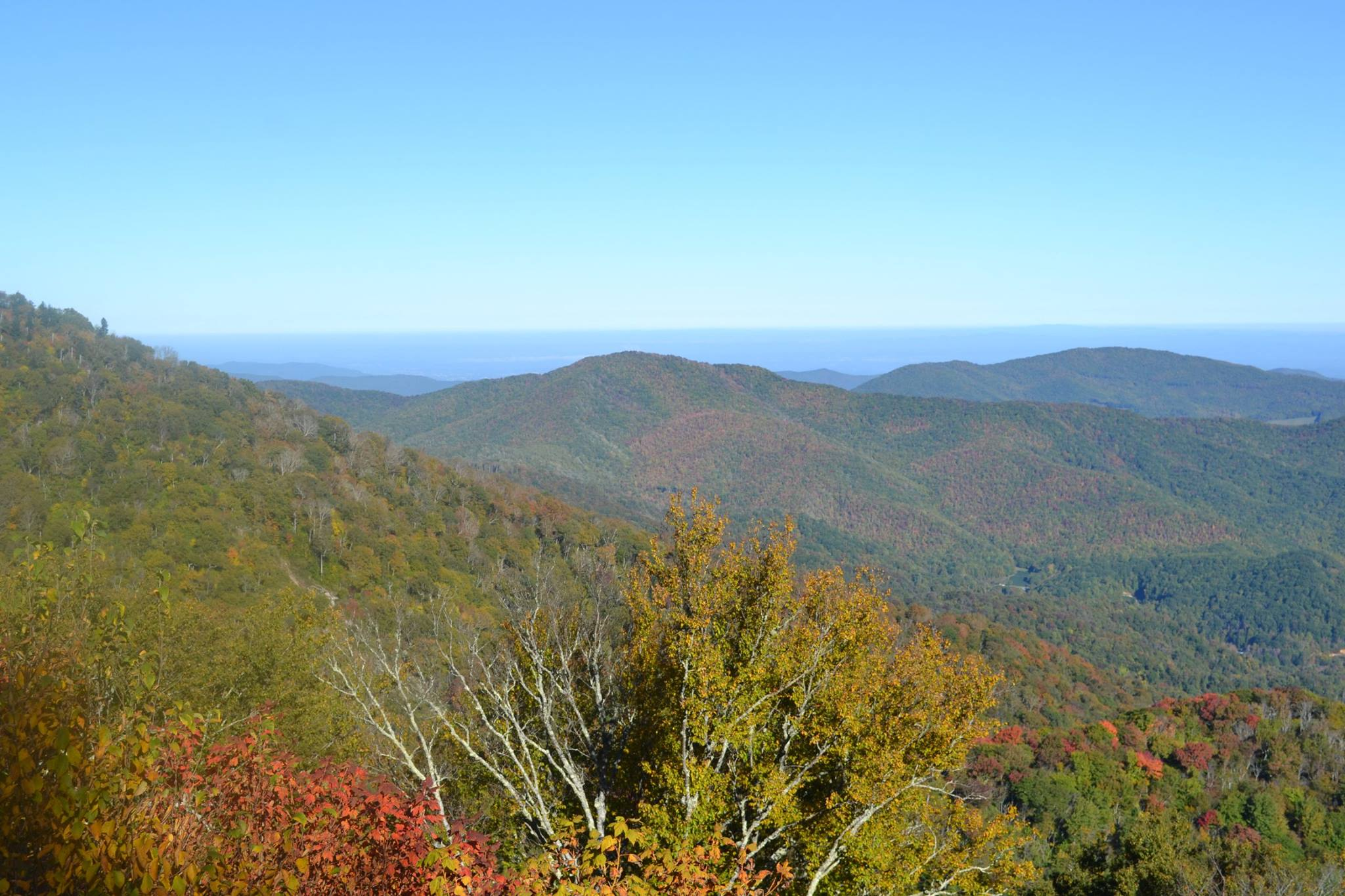 Roan Mountain photo from James Tinch