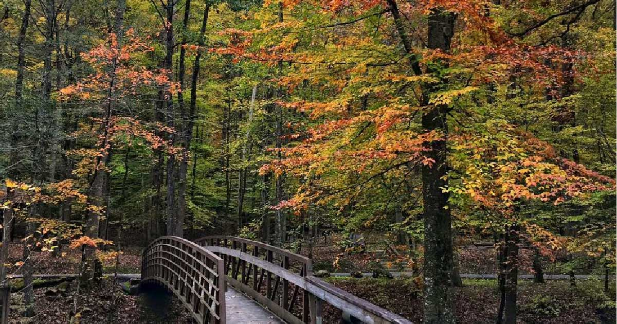 Fall at Frozen Head State Park